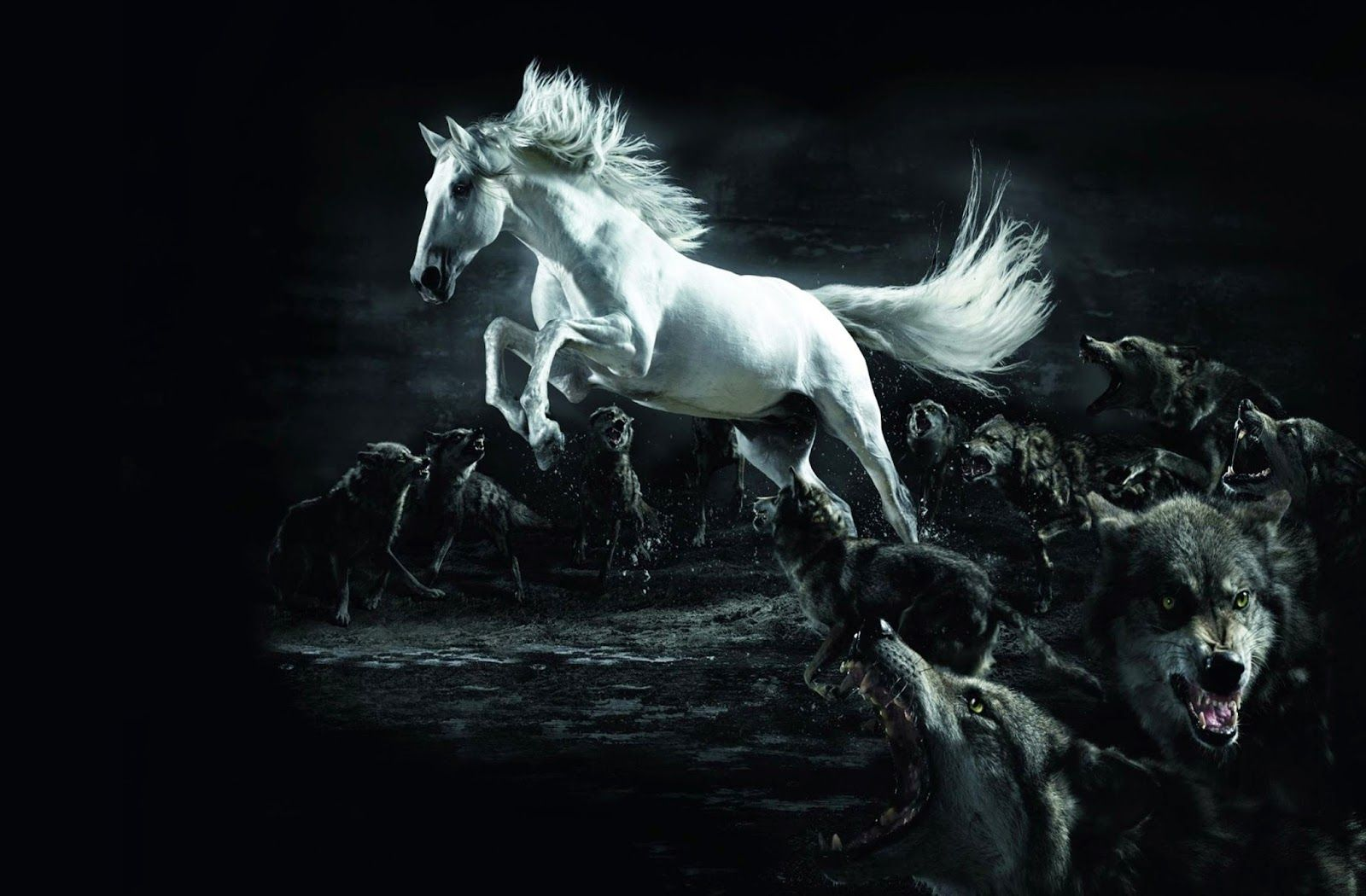 White Horse 3D Black Wallpaper