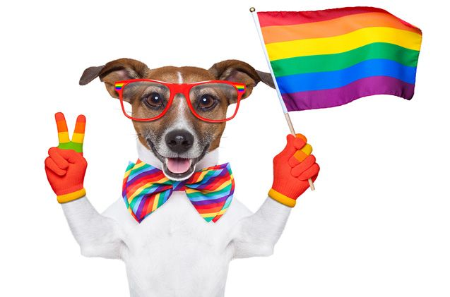 The Hairy Dogfathers have some advice when it comes to bringing your dog along to Pride celebrations.