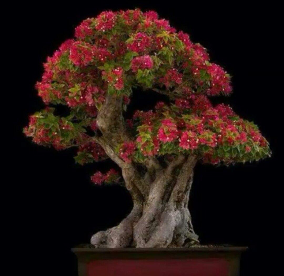 Bonsai Tree!