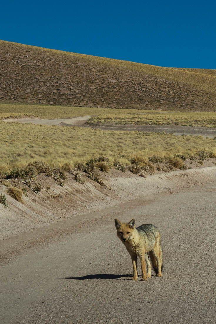 17 things to do in san pedro de atacama desert stupid