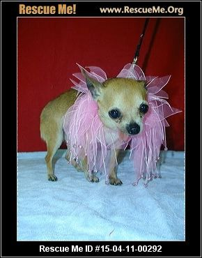 South Carolina Chihuahua Rescue Adoptions Rescueme Org With