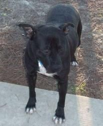 Adopt Luna 31378 On With Images I Love Dogs Homeless Pets