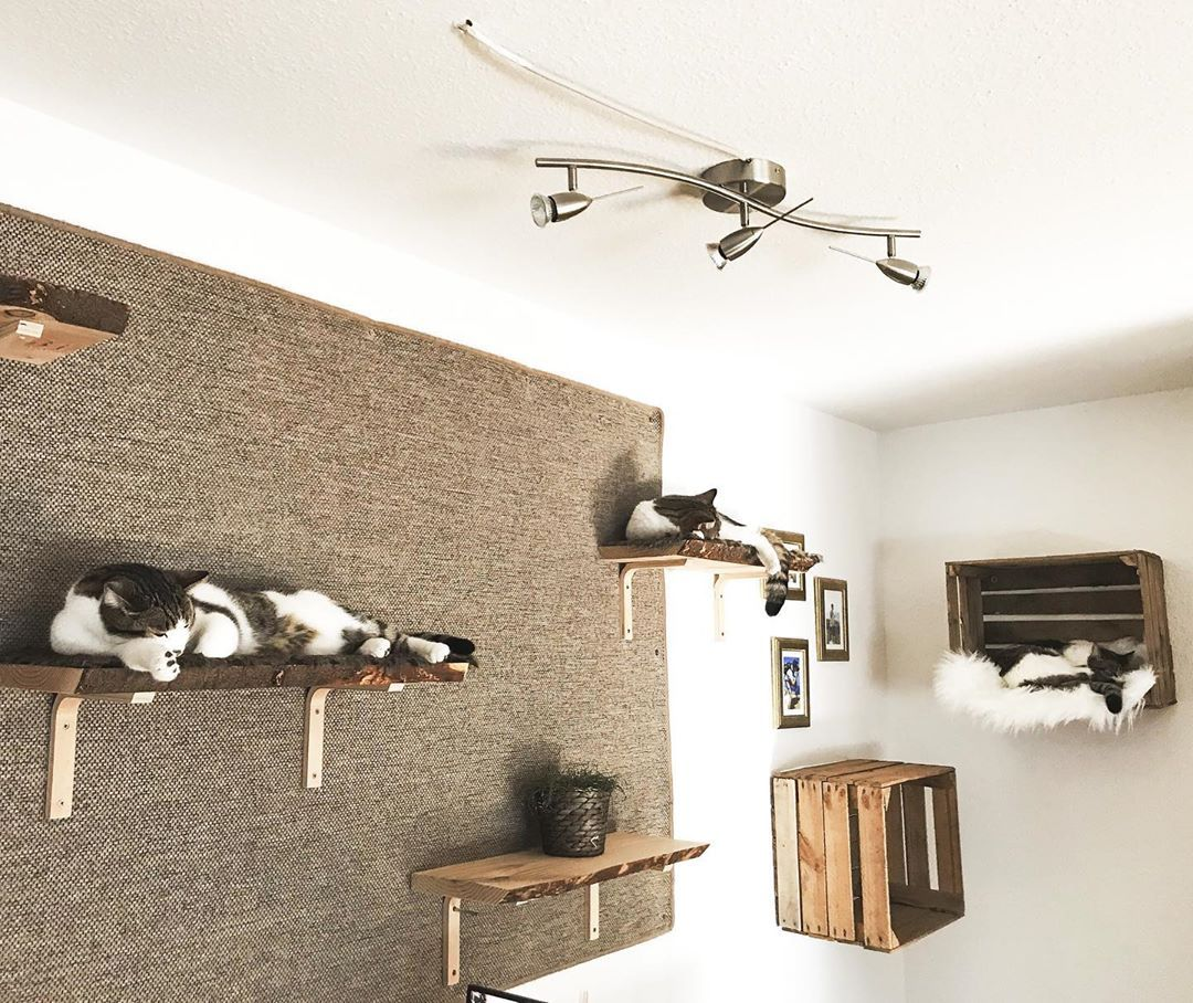 Catwalk Cat Diy Cat Room Cat Wall Furniture