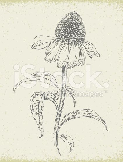 Simple Inked Flower Drawing Google Search Flower Drawing Wildflower Drawing How To Draw Hands