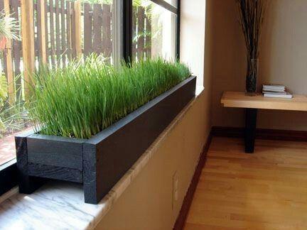 Exceptional Windowsill Planter With Wheat Grass Idea