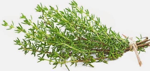 يخفف التهاب الحلق والسعال غني بمضادات الأكسدة ي خفض ضغط الدم المرتفع فيديو مشروب الزعتر المراجع يخفف التهاب الح Herbs Essential Oils Guide Thyme Herb