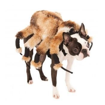 Rubies Giant Spider Dog Costume Pets Dog Spider Costume Pet