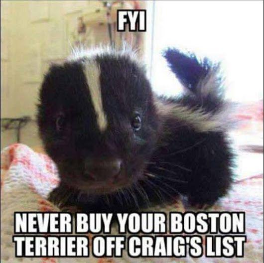 Skunk Bough On Craigslist   Funny dog memes, Cute funny ...