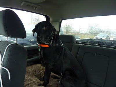 """Chapter 37 - The Book of Barkley - """"On the Road Again""""."""