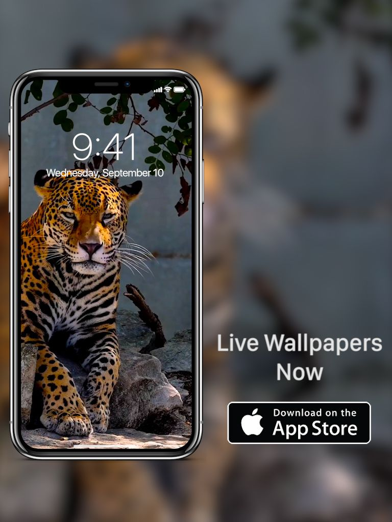 High Quality Live Wallpapers For Iphone Xs And Iphone Xs Max