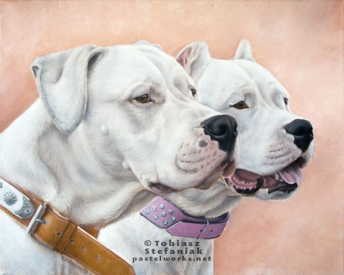 Dogo Argentino In Oils Dog Art Dog Argentino Dog Artist