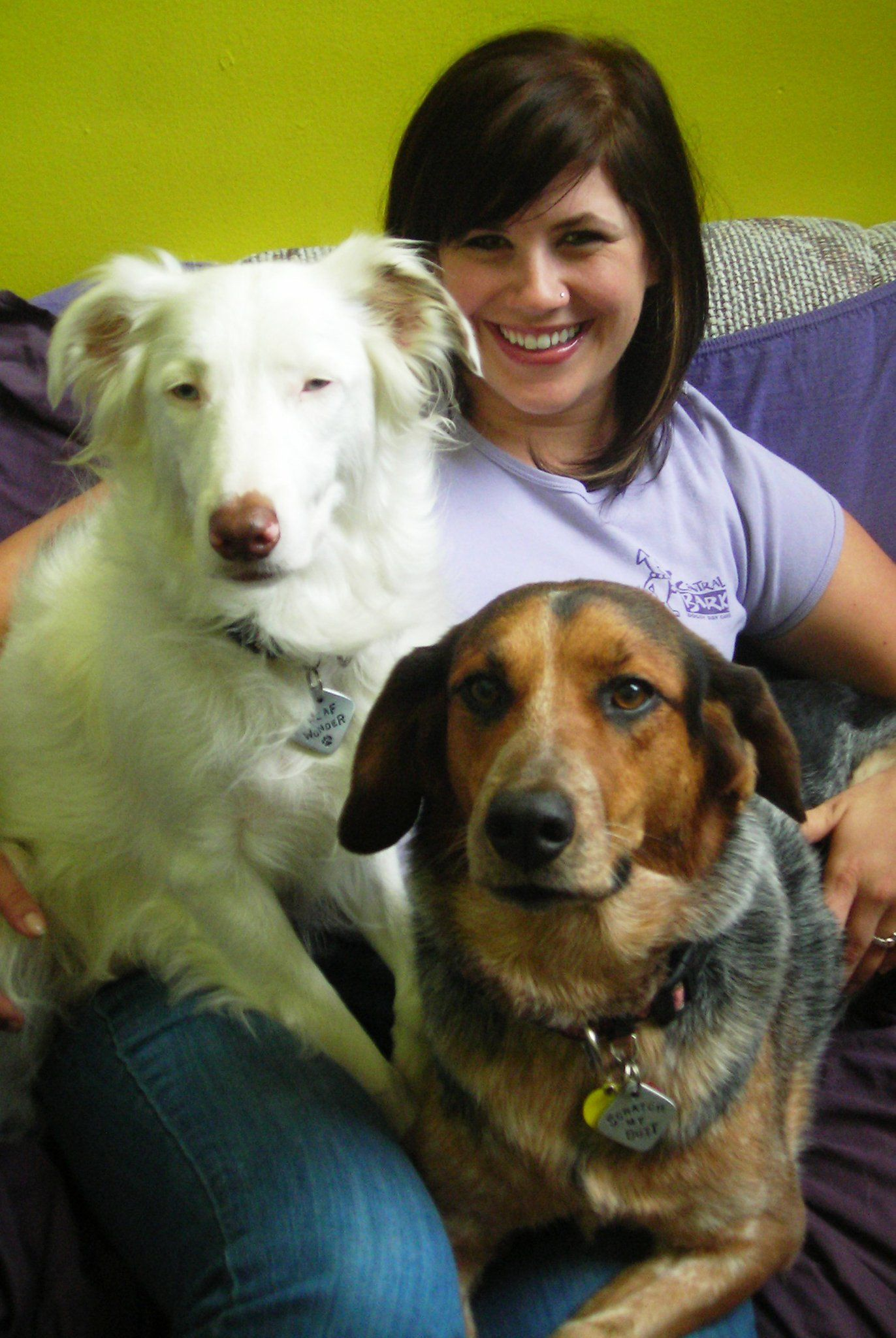 Central Bark Usa Doggy Day Care Fort Lauderdale With Images Dog Daycare Doggy Dog Boarding