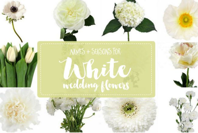 The essential white wedding flowers guide types of white flowers the essential white wedding flowers guide types of white flowers names seasons mightylinksfo