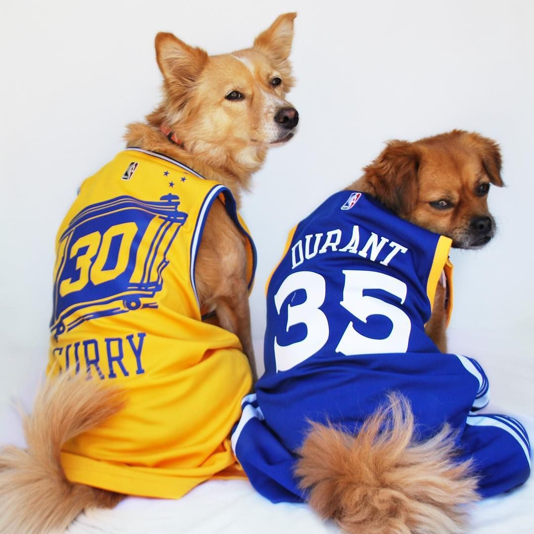 check out 589f9 3cdfe Dogs love basketball! Curry and Durant Golden State Warriors ...