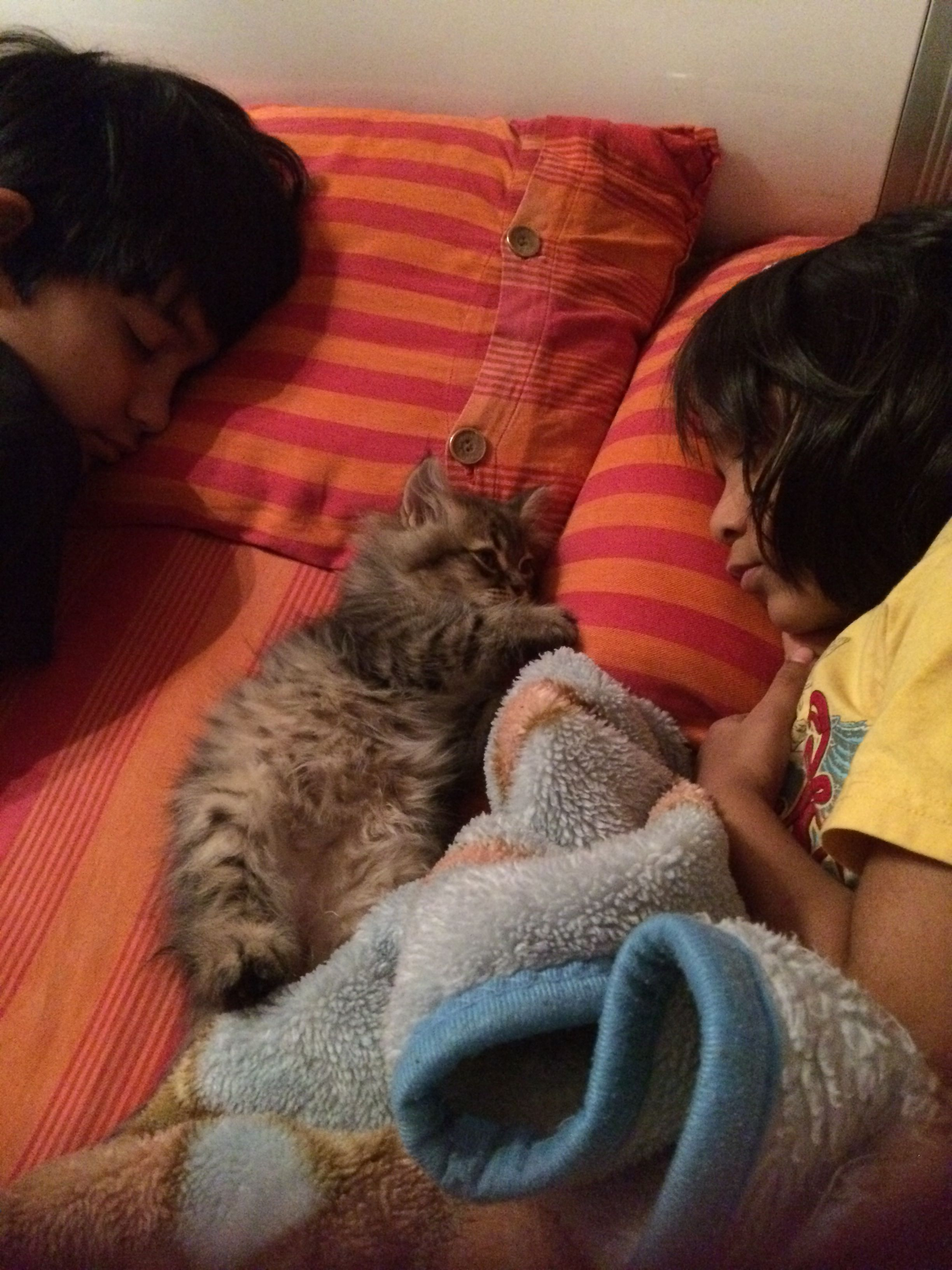 My babiessleeping....just bought Zippo my kitten home one day ago n he was sleepin with my kids like this❤️❤️❤️