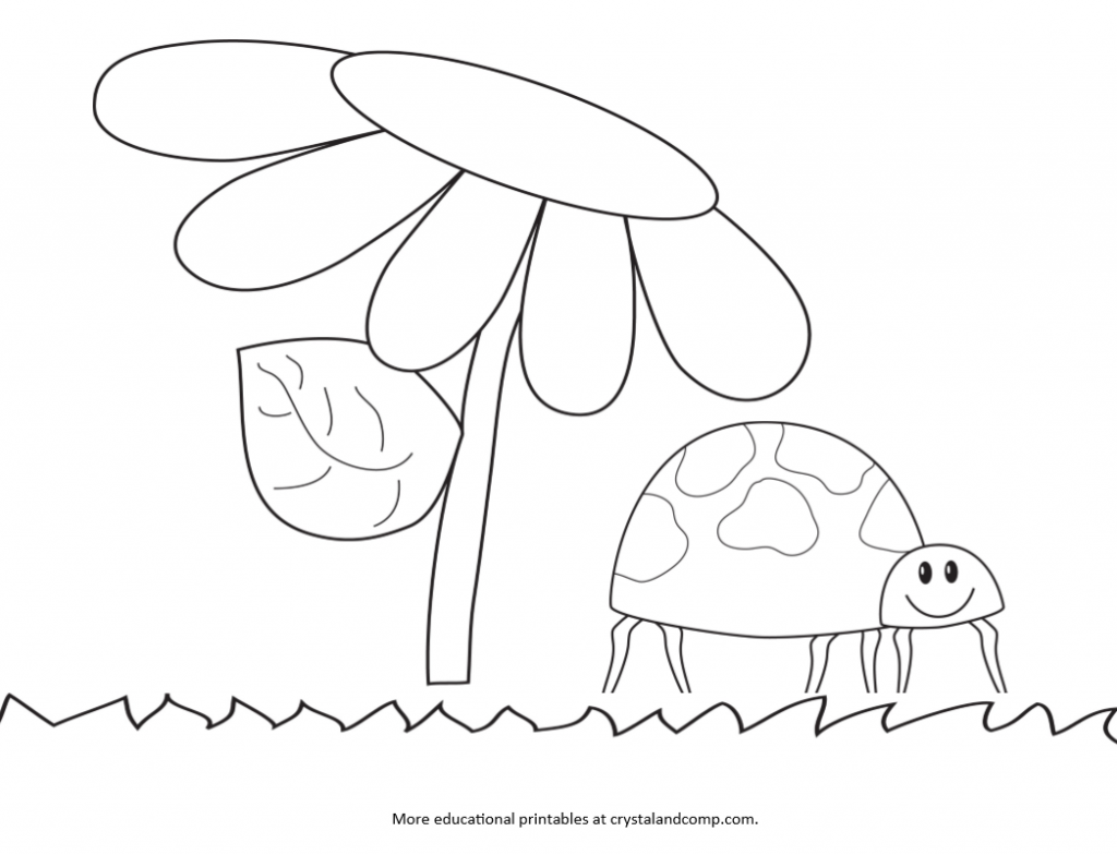 Kid Color Pages Ladybug Life Cycle Coloring for kids