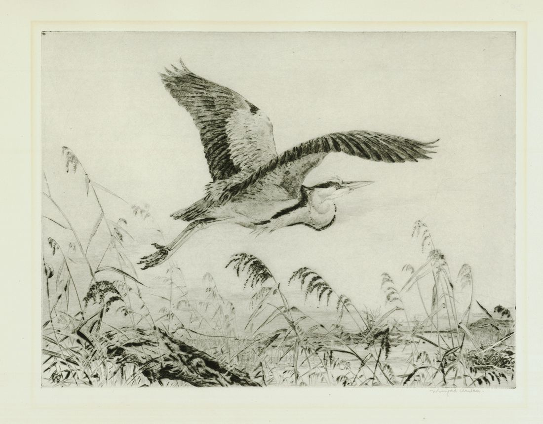 Winifred Austen 1876-1964:  Heron Making Off, Etching, image size 8 3/4 x 11 3/4 inches, pencil signed.
