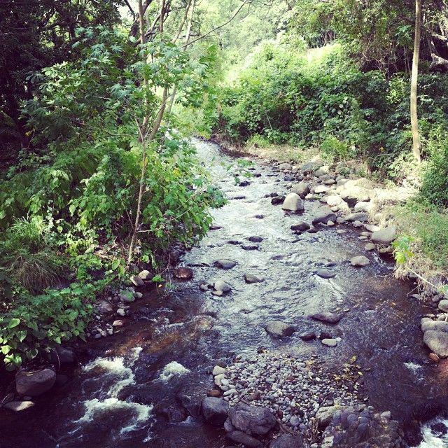 los mangos y los rios y mis hijas
