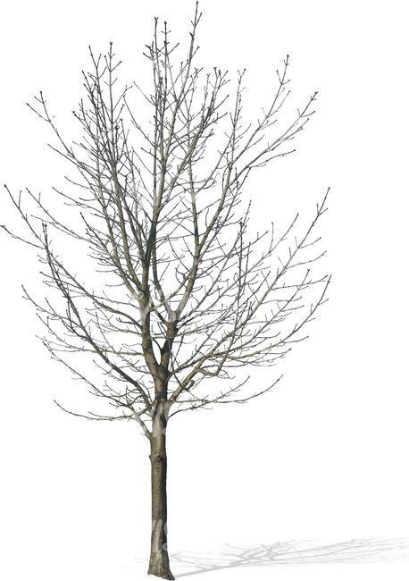 Baum Bibliothek Pflanzen Adobe Photoshop Baume Zeichnen Drahtbaume Architektur Zeichnungen Landschaftsplanung Arquitetura
