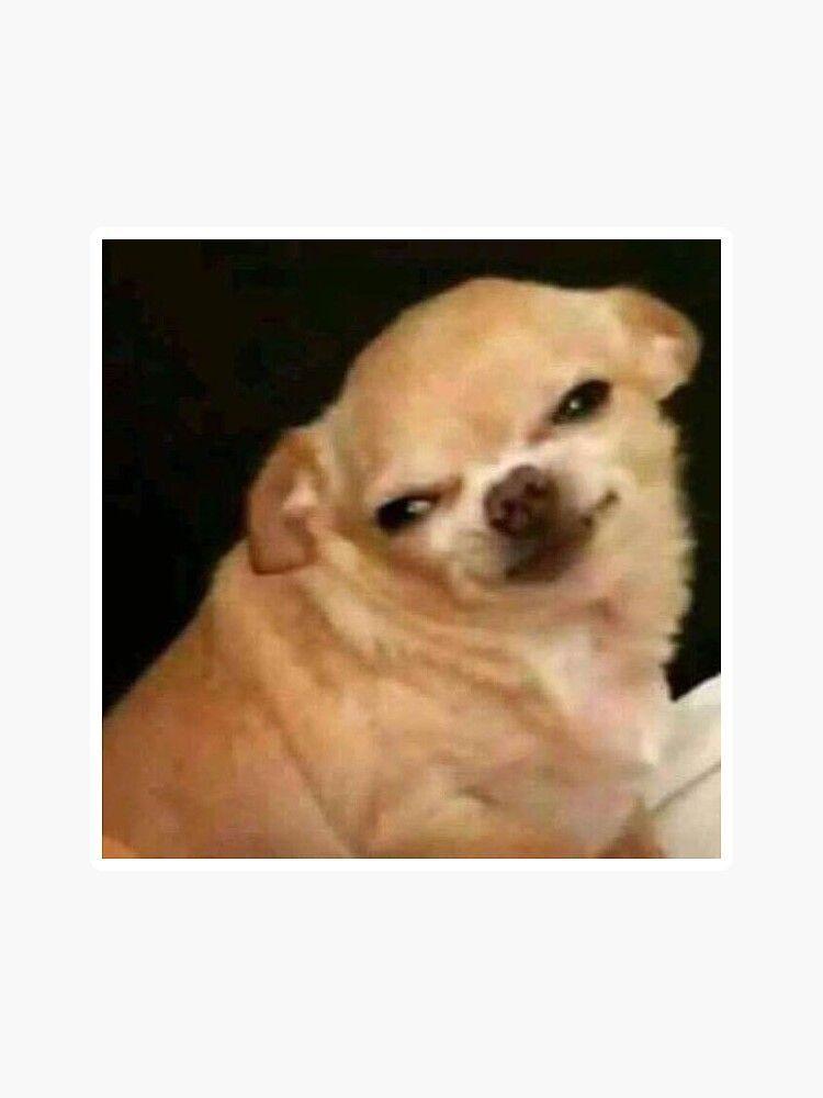 Easyrecipechef Cute Funny Animals Animal Memes Funny Animal Memes