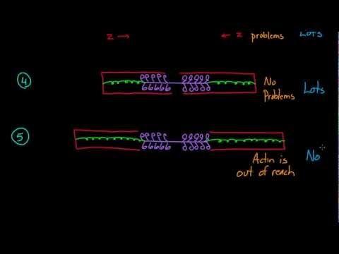 ▷ Frank-Starling Mechanism - YouTube | Pulmonary | Starling, Rn