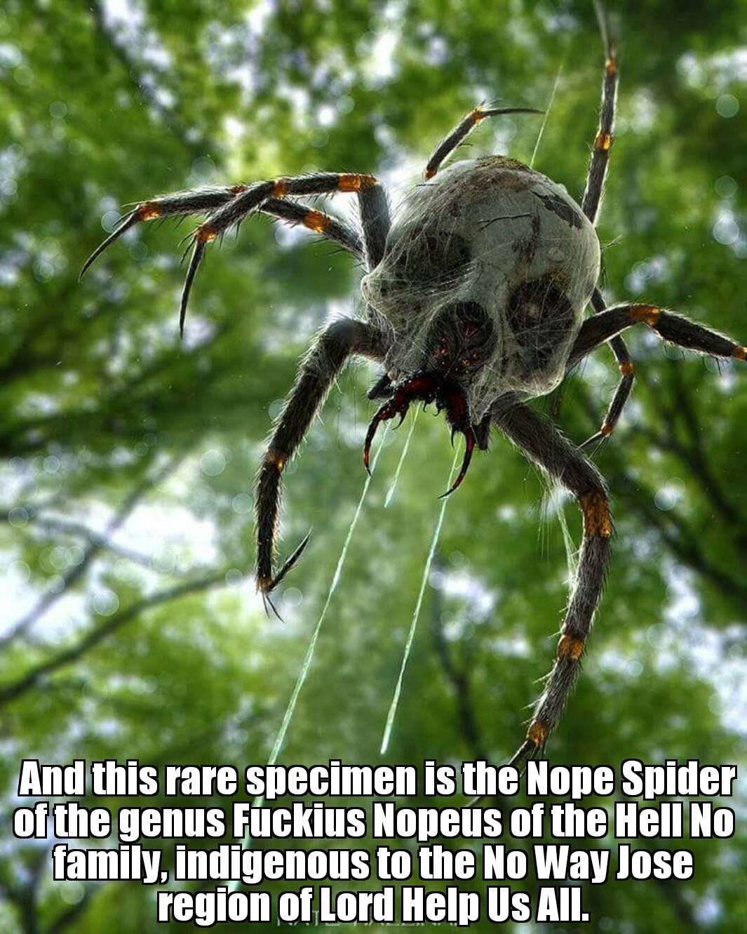 Pin By Jenn On Umno Funny Spider Animals