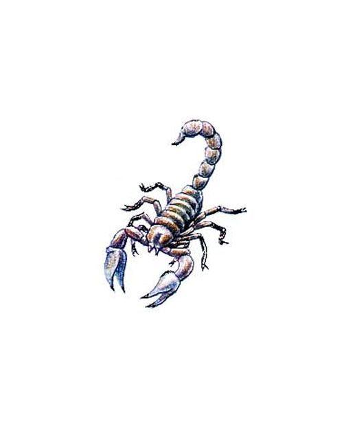 Small Scorpion Tattoo Free Design Ideas