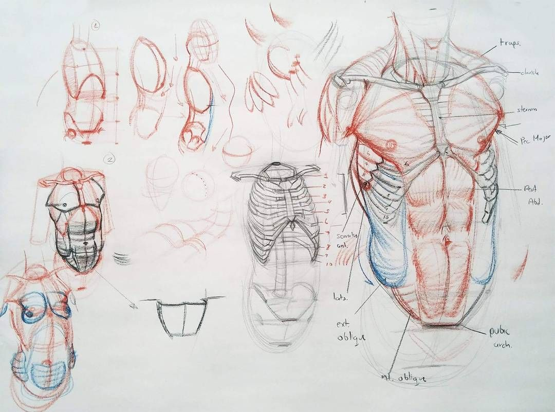 Torso construction demo #got #art #abs #muscles #aesthetic #drawing ...