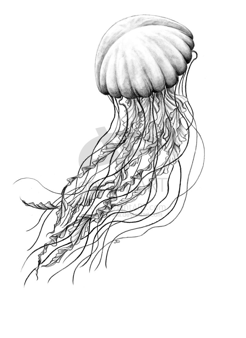 Auf Deviantart Jellyfish Aesthetic Jellyfish Anime Jellyfish Aquarell Jellyfish Aquarium Jellyfis Jellyfish Drawing Jellyfish Art Jellyfish Illustration