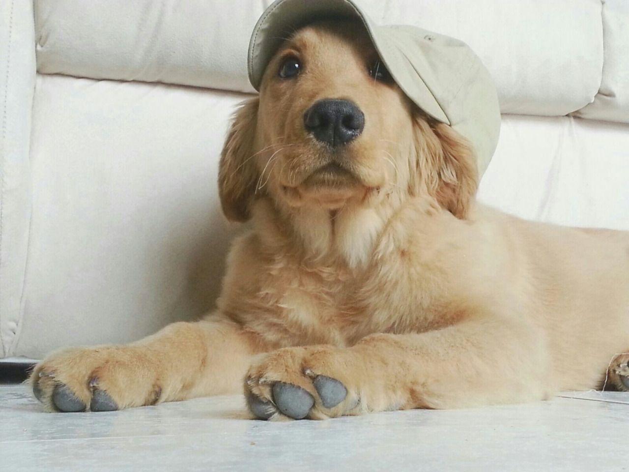 Handsomedogs Cute Puppies Puppies Animals