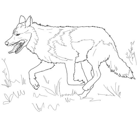 Running Mexican Grey Wolf Coloring Page From Wolf Category Select