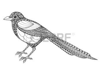 Coloring Pages Print Hand Drawn Magpie Illustration For Antistress Coloring Page With High Details Isolated On Whi Dibujos Paginas Para Colorear Ilustraciones