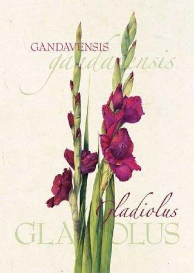 august birth flower | botanical illustrati
