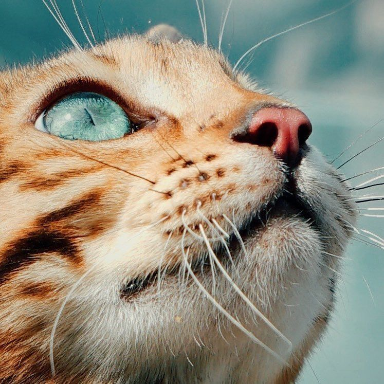 Pin By Shahd Alayyach On Cats In 2020 With Images Cats Animals Cat Photography