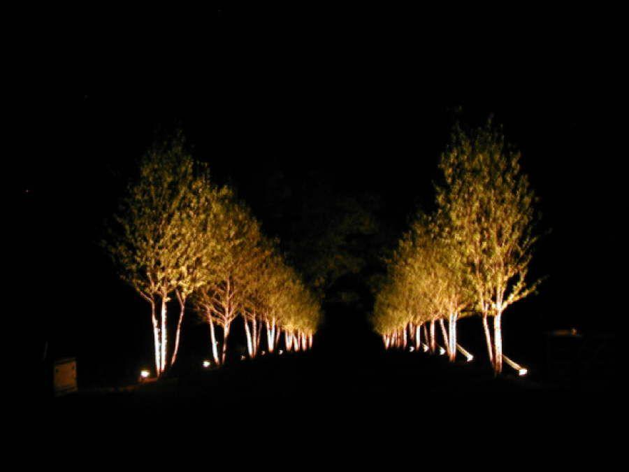 terrific exterior uplighting. photos of uplighting tree  Tree Uplighting Fixtures Lighting