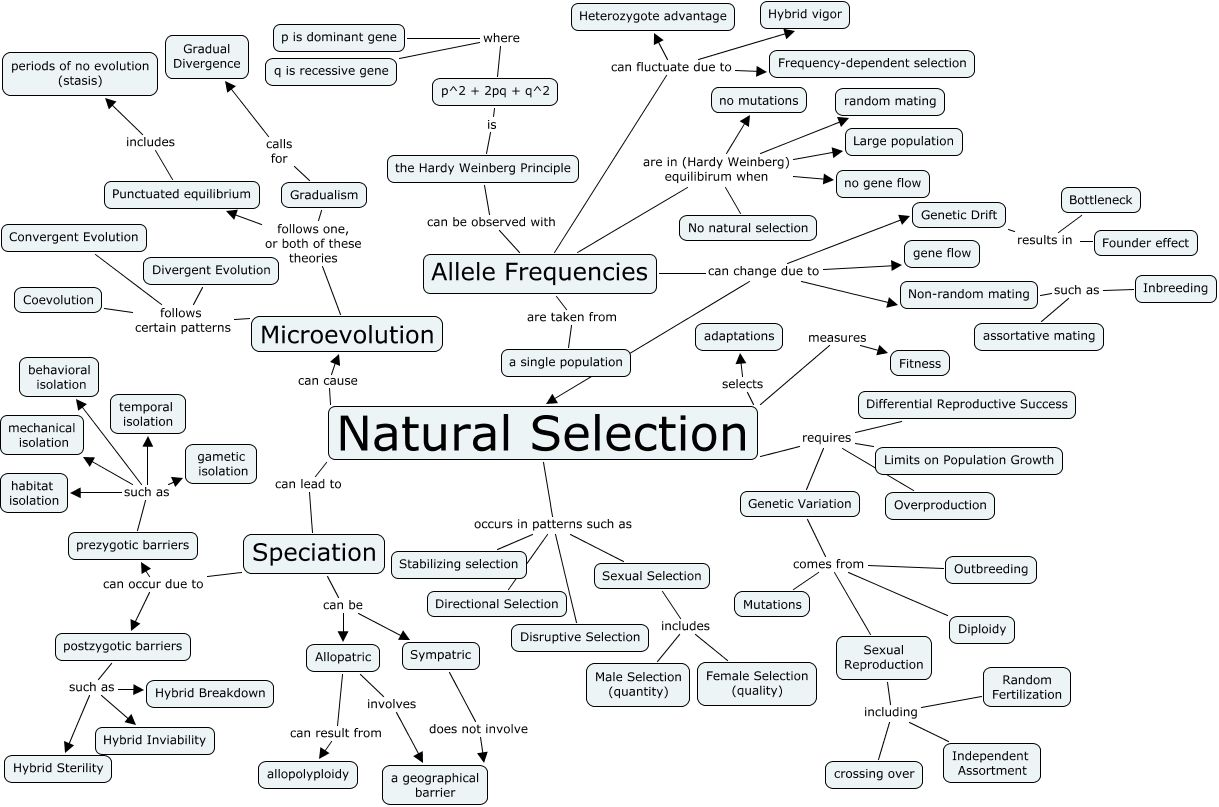 Natural Selection Concept Map