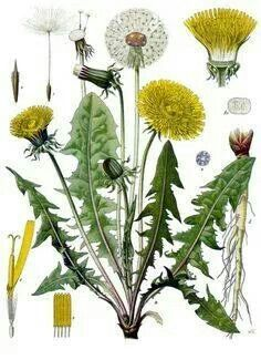 Dandiline Flower Art