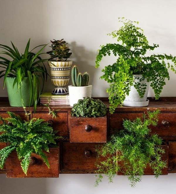 Lovely 5 Raisons Pourquoi Vos Plantes Du0027intérieur Jaunissent