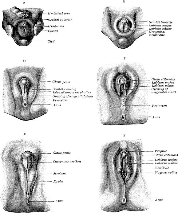 Pin By Leslie Alcon On Anatomy  Pinterest  Anatomy -1960