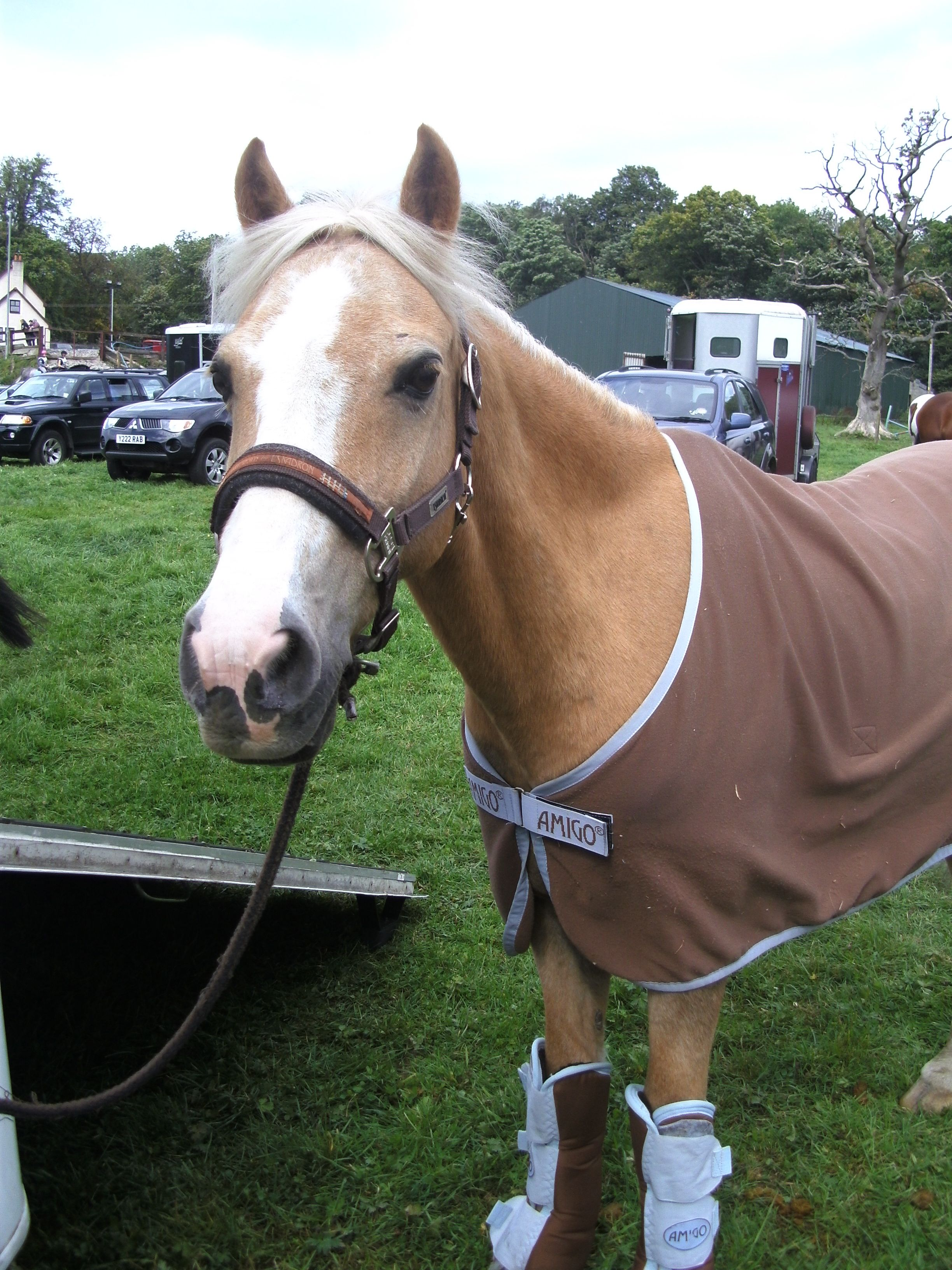 Free Foals For Adoption Uk Horses For Sale Adoption Buy Sell Adpost Com Classifieds Horses For Sale Horses Free Horses