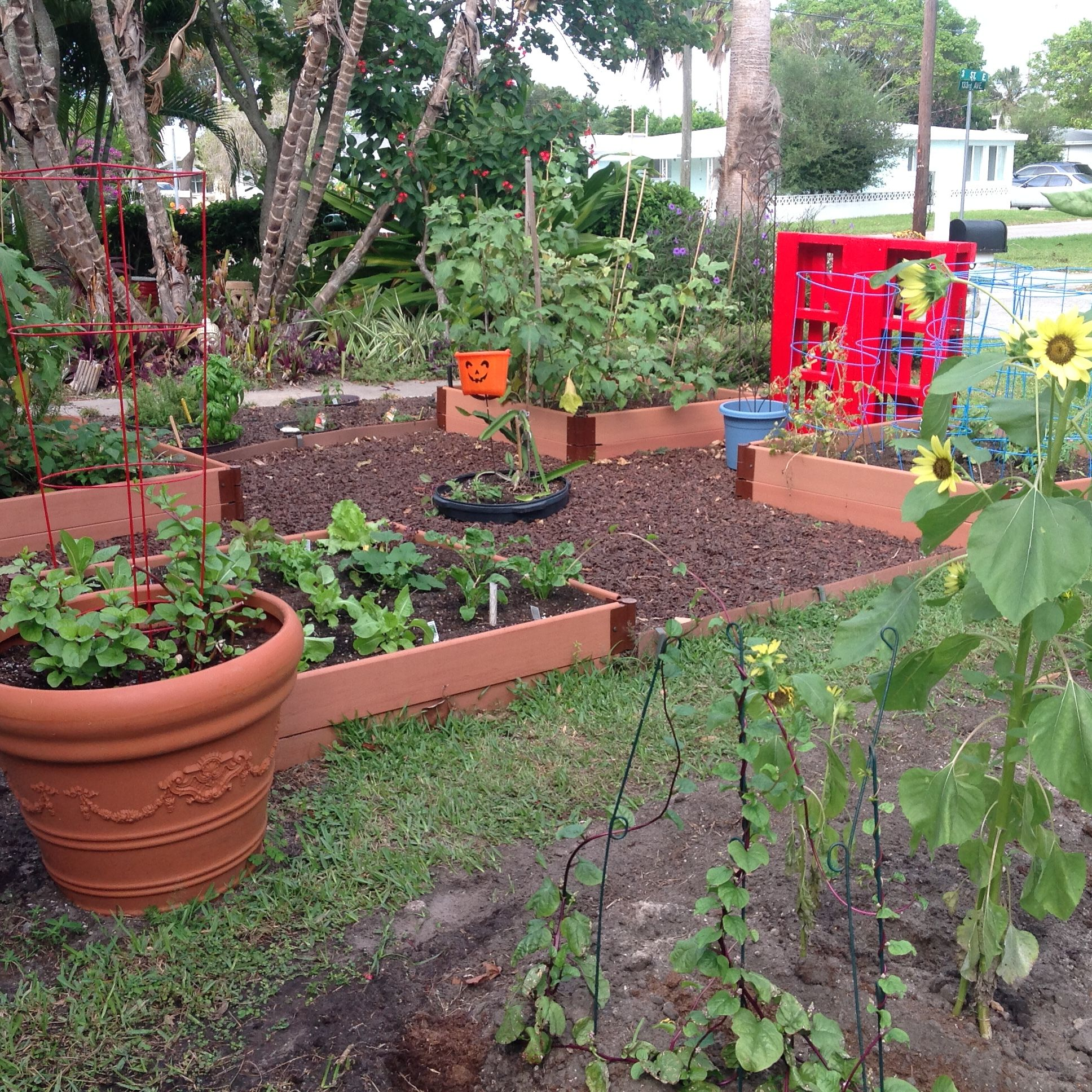 Best Vegetables For A Fall Garden: Fall Planting In Vegetable Garden.