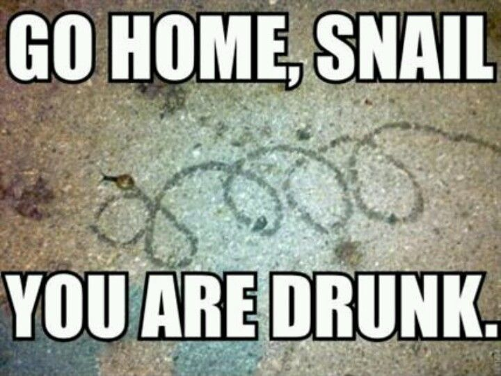 Funniest Meme Clean : Drunk people are stupid drunk snails are just hilarious funny