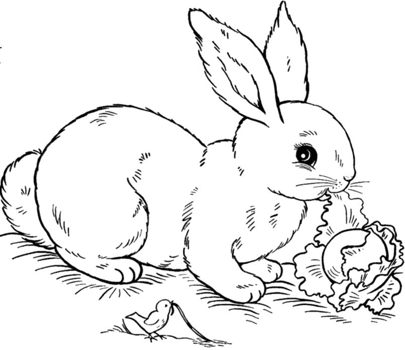 Rabbits Are Looking At Food Coloring Pages Bunny Coloring Pages Animal Coloring Pages Easter Bunny Colouring