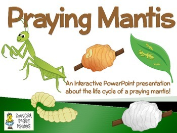 Praying Mantis  An Interactive Powerpoint Presentation Of Their