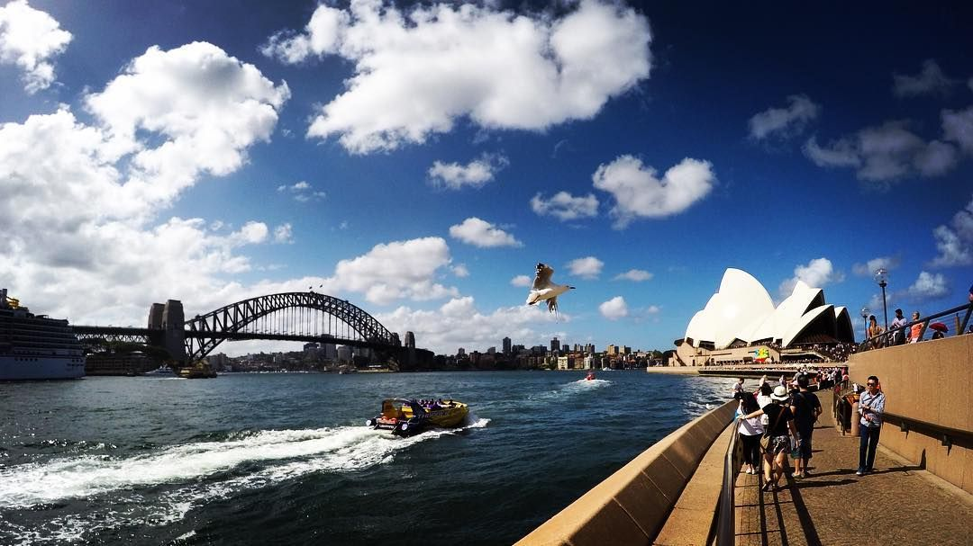 The seagull photobombed my shot of the Harbour bridge and Opera house. If only it was a plane... #notphotoshopped #photobomb #gopro #sydneyoperahouse #sydneyharbourbridge by dlawgg http://ift.tt/1NRMbNv