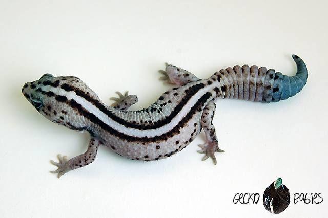 Pin de andrewh en Animals | Pinterest | Iguanas, Animales salvajes y ...