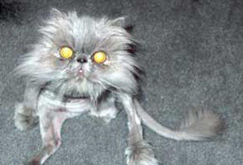 22 Ugliest Cats In The World   SMOSH - Katten