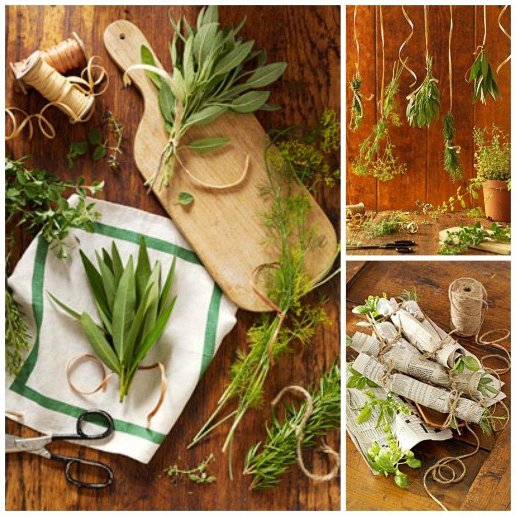 How To Dry Herbs Secado De Hierbas Hierbas Plantas Ornamentales