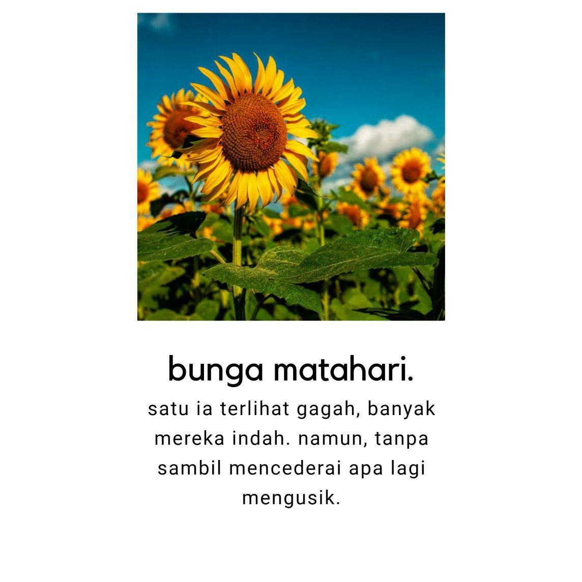 kata kata gombal tentang bunga matahari