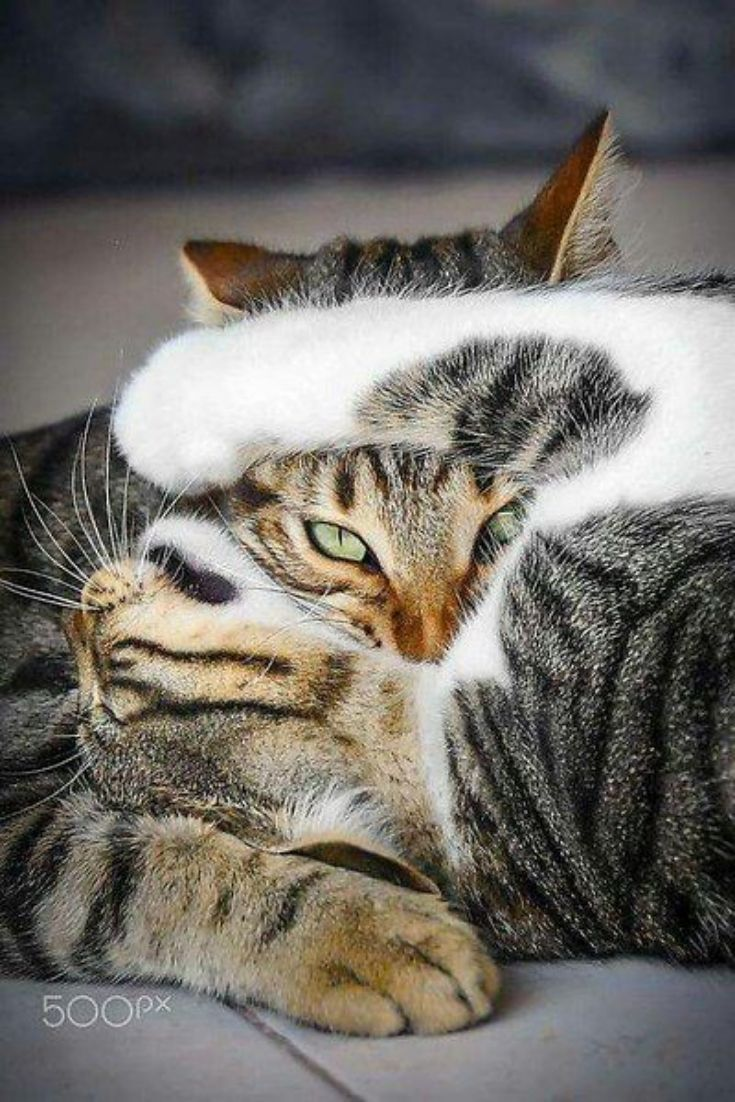 Pin By Gel On Sweet With Images Cute Cats Crazy Cats Beautiful Cats